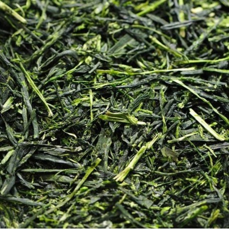 Té Verde japón sencha con Matcha